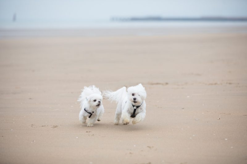 Dog Friendly Beach Break at The Gallivant