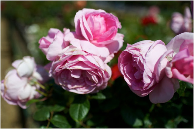 The Scent Of Summer…