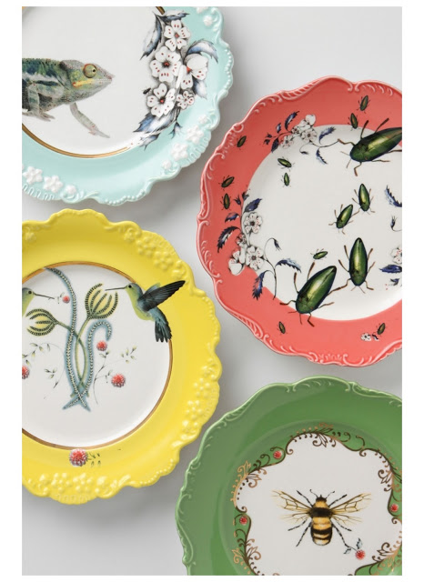 Explore the Natural World with Anthropologie
